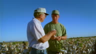 Low angle medium shot dolly shot middle age male farmer and younger farmer examining cotton crop in field / Thatcher, Arizona