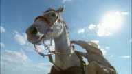 Low angle medium shot pan cowboy cllimbing onto horse/ Edinburg, Texas