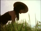 low angle of Asian woman in hat picking crops in rice paddy / Central Java / Indonesia