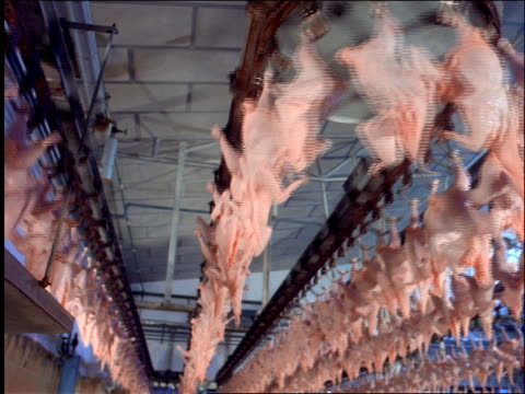 low angle of chicken carcasses moving on conveyor racks / Brazil