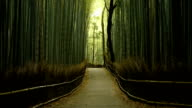 Low angle panning view of a bamboo forest