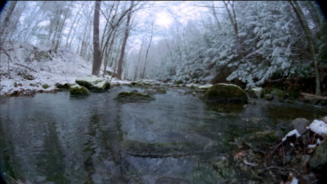 Low angle rocky stream lined w/trees changing through four seasons / Vermont
