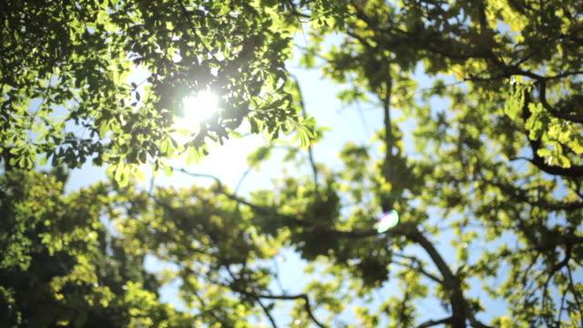 Low angle shot across a verdant tree canopy.