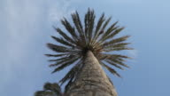 Low angle shot of a palm tree.