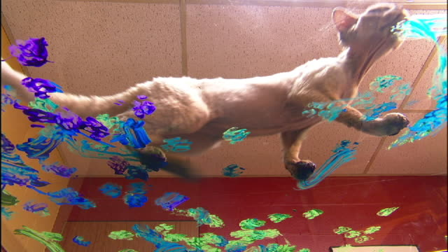 Low Angle static - A Devon Rex cat smears colorful paint on a glass surface.