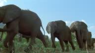 Low angle wide shot elephants walking past CAM / Tsavo East National Park / Kenya