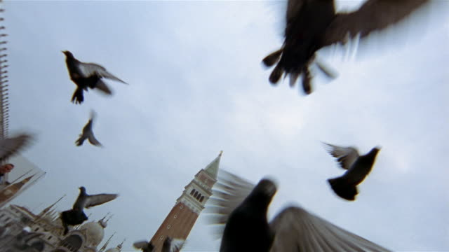 Low angle wide shot pigeons taking off in St Mark's Square / campanile in background / Venice, Italy
