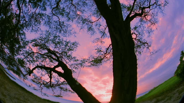 Low angle wide shot time lapse clouds with silhouette of tree in foreground / sunset to night / Maui, Hawaii