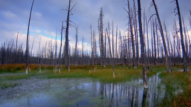 Low angle wide shot time lapse dead trees and pond with cloud reflections in area damaged by forest fire / Yellowstone