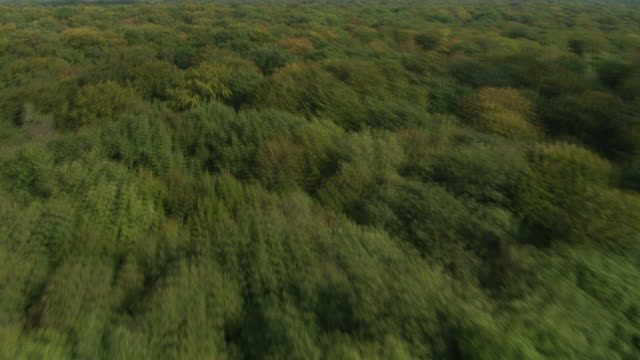 Low Flight Over Woods South Of Demigny