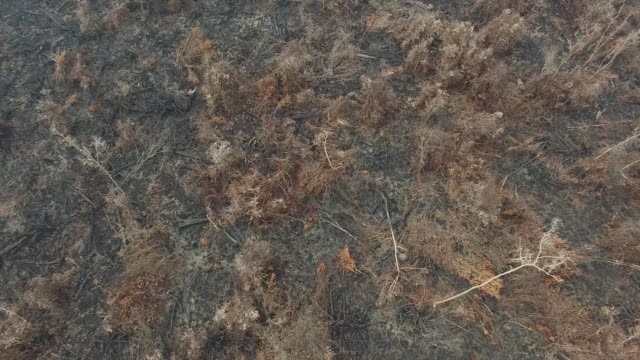 Low fly by views of burnt vegetation next to a palm oil plantation in this aerial video taken in Ogan Komering Ilir South Sumatra Indonesia on...