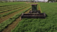 Low on tractor flying backwards, 4K Video of Cornfield and agriculture production like corn, wheat, soybean, sunflowers, and vineyards with tractor, logging