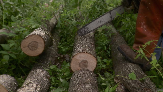 MS Low section of logger cutting through logs with chainsaw, Stowe, Vermont, USA