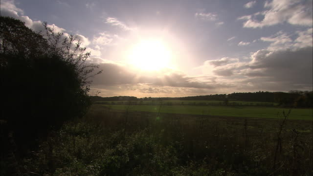 Low sun shines over field and hedgerow, Norfolk, UK