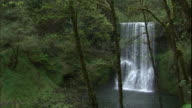 Lower South Falls flows in the green forest of Silver Falls State Park, Oregon.