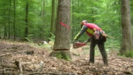 MS Lumberjack at work in forest / Zerf, Rhineland Palatinate, Germany