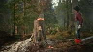 SLO-MO-Holzfäller Fällen eines Baumes mit einer Axt