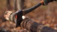Lumberjack hitting tree with hatchet