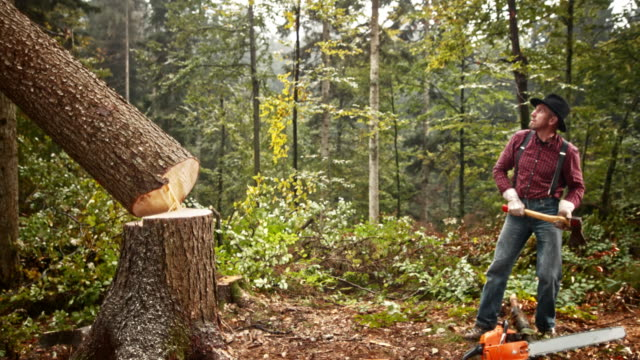 SLO MO Lumberjack with an axe watching a tree fall