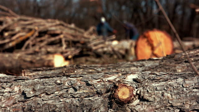 Lumberjacks at sawmill