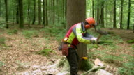 MS Lumberjacks at work in forest / Zerf, Rhineland Palatinate, Germany