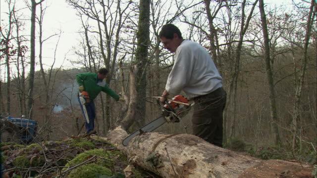 WS Lumberjacks sawing tree in forest / Burgundy, France