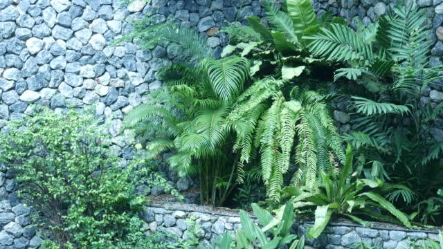 lush foliage in spa garden