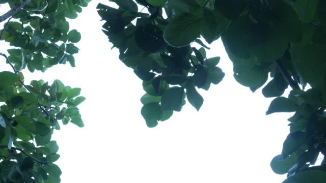 lush foliage on background