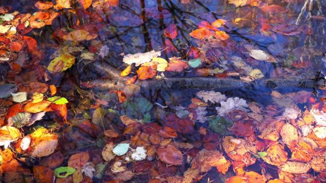 Lush Foliage On Standing Water