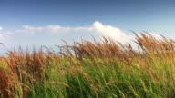Lush grass