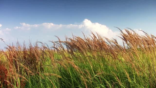 Grünen Gras