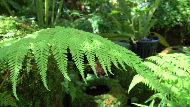 lush green plant of fern