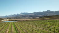 Lush green vineyards in the Cederberg Mountains