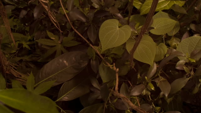Lush plants flourish and grow in the dense woodlands. Available in HD.