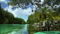 WS Lush tropical trees growing near green river / Ocho Rios, Jamaica