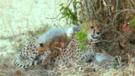 Maasai Mara 5 Sept Pm