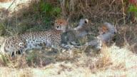 Maasai Mara 5th Sept 16