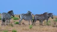 Maasai Mara 6 Sept Pm