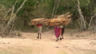 Maasai or Samburu Women and girls carrying bundles of wood, WITH AUDIO