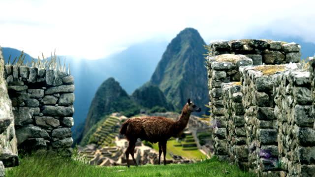 Machu Picchu - weergave achter Lama