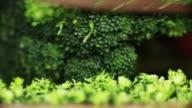 Macro chopping broccoli