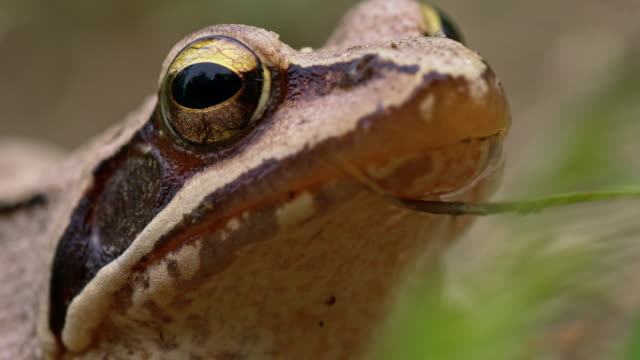Macro shot of a brown frog