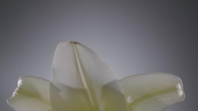 Macro shot of a Lili flower