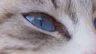 Macro shot of cat's eye