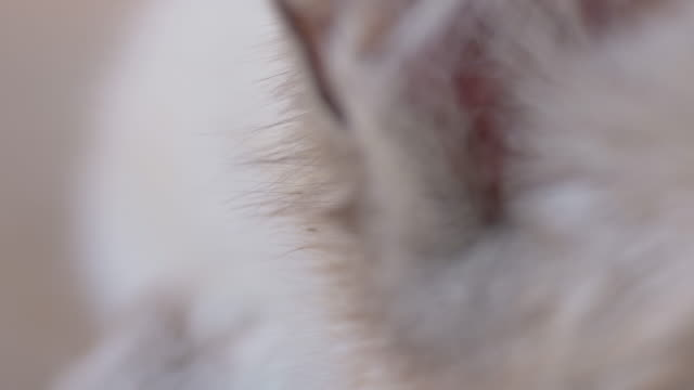 Macro shot of cat's head