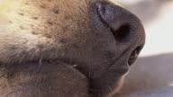 Macro shot of dog's snout