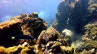 Herrliche Anemone (Heteractis Magnifica) Unterwasser Seestück