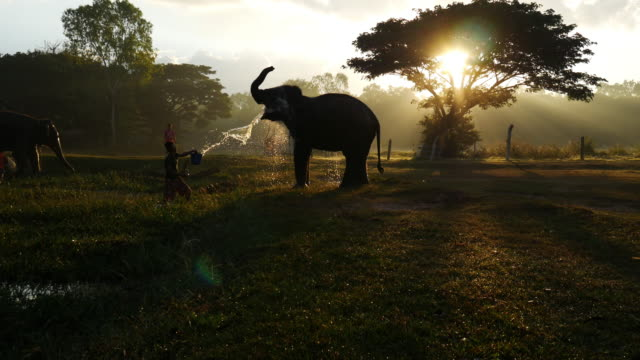 Conduttore di elefanti Cavalchi un elefante e un bagno di elefante in fiume