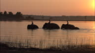 Mahouts ride Indian elephants in a lake.