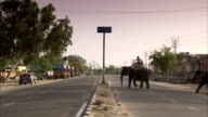 Mahouts ride their elephants across a paved street. Available in HD